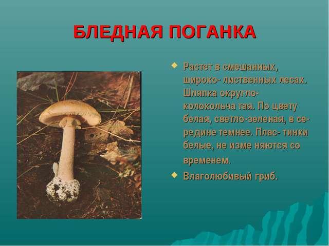БЛЕДНАЯ ПОГАНКА Растет в смешанных, широко- лиственных лесах. Шляпка округло-...