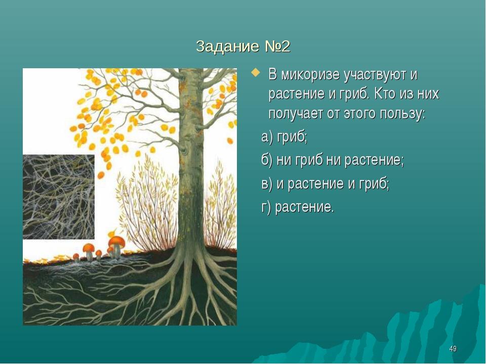 * Задание №2 В микоризе участвуют и растение и гриб. Кто из них получает от э...