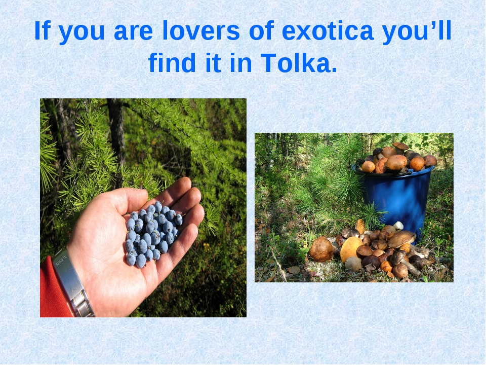 If you are lovers of exotica you'll find it in Tolka.