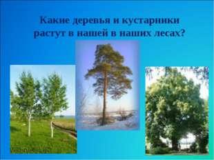 Какие деревья и кустарники растут в нашей в наших лесах?