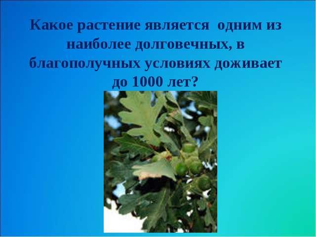 Какое растение является одним из наиболее долговечных, в благополучных услови...