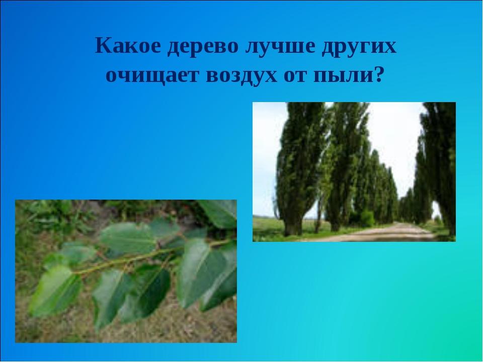 Какое дерево лучше других очищает воздух от пыли?