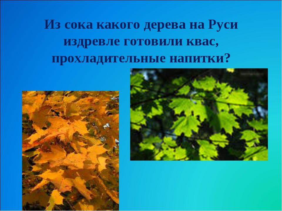 Из сока какого дерева на Руси издревле готовили квас, прохладительные напитки?