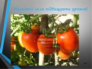 Магнітні сили підвищують урожай