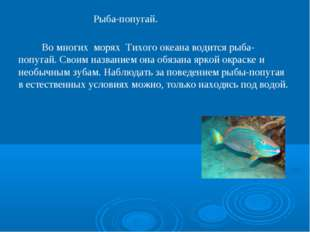 Рыба-попугай. Во многих морях Тихого океана водится рыба-попугай. Своим назва