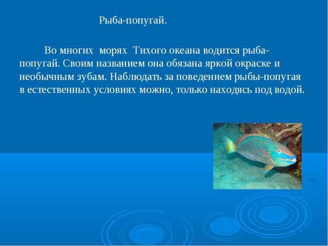 Рыба-попугай. Во многих морях Тихого океана водится рыба-попугай. Своим назва...