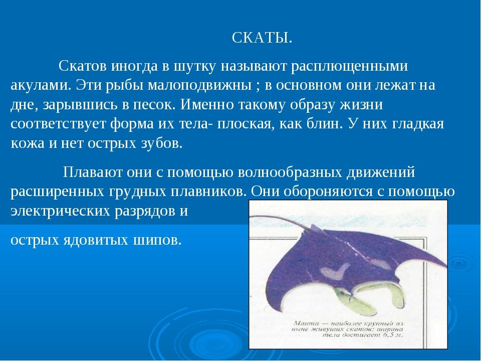 СКАТЫ. Скатов иногда в шутку называют расплющенными акулами. Эти рыбы малопод...