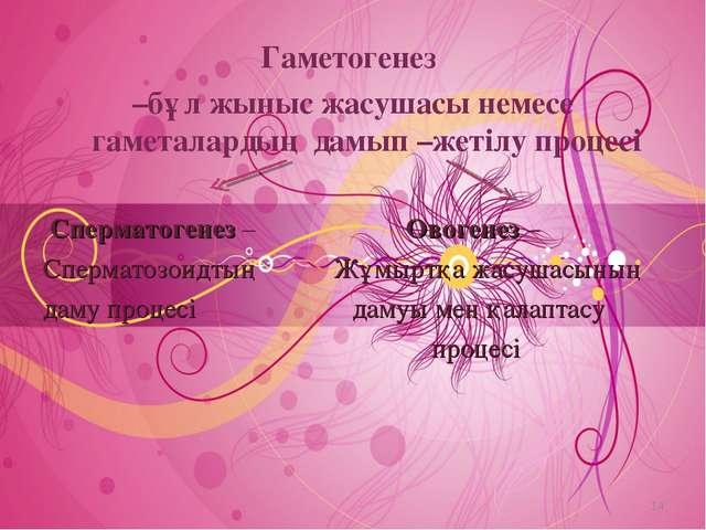 Гаметогенез –бұл жыныс жасушасы немесе гаметалардың дамып –жетілу процесі Спе...