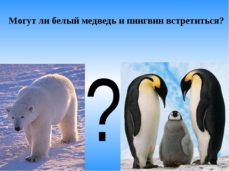 Могут ли белый медведь и пингвин встретиться?
