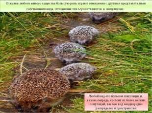 В жизни любого живого существа большую роль играют отношения с другими предст