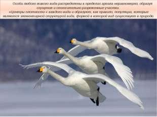 Особи любого живого вида распределены в пределах ареала неравномерно, образу