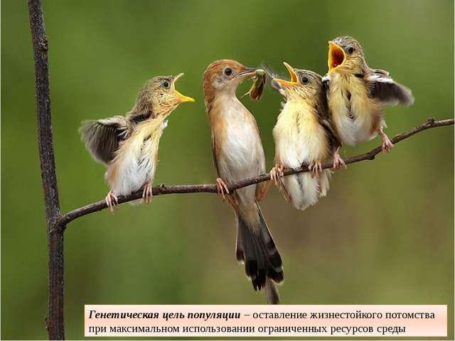 Генетическая цель популяции– оставление жизнестойкого потомства при максимал...