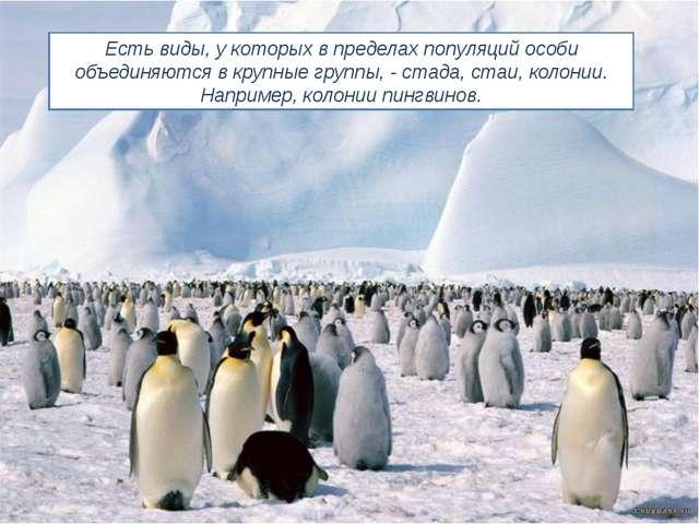 Есть виды, у которых в пределах популяций особи объединяются в крупные группы...