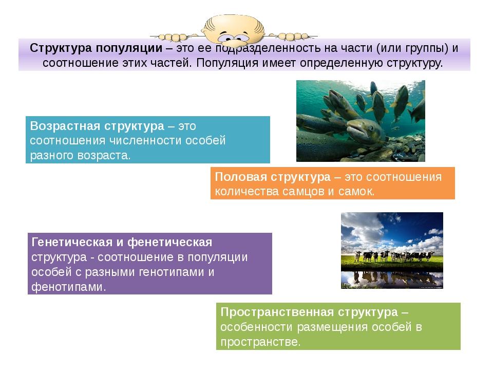 Возрастная структура популяций презентация