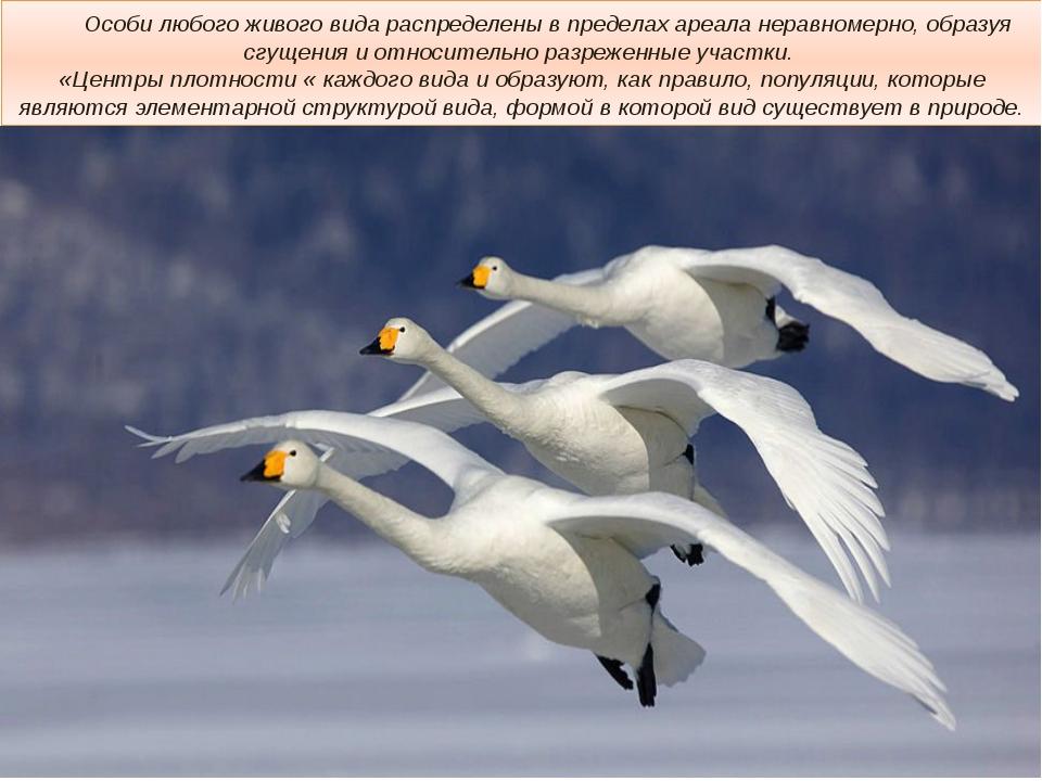 Особи любого живого вида распределены в пределах ареала неравномерно, образу...