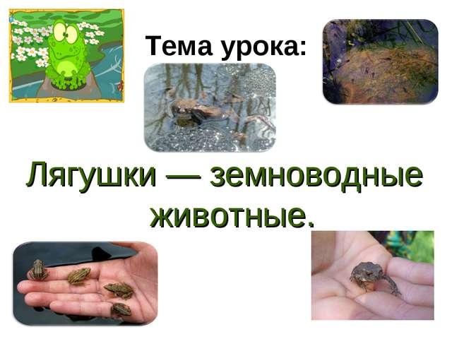 Тема урока: Лягушки — земноводные животные.