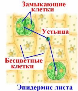 hello_html_3dc4c3a1.jpg