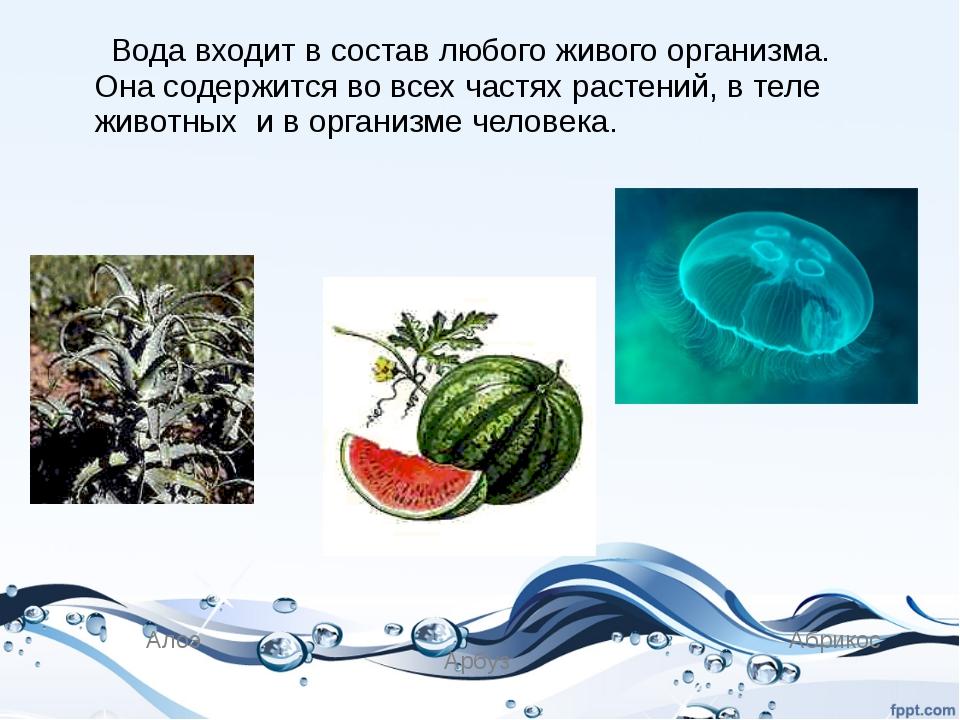 Вода входит в состав любого живого организма. Она содержится во всех частях...
