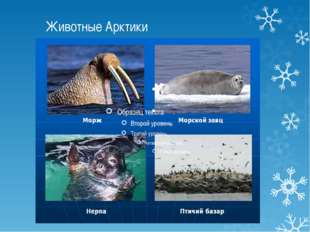 Животные Арктики