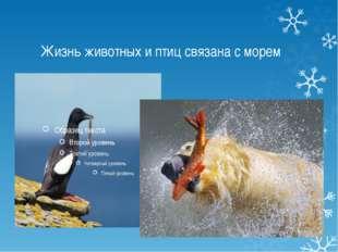 Жизнь животных и птиц связана с морем