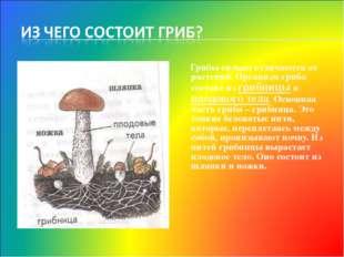 Грибы сильно отличаются от растений. Организм гриба состоит из грибницы и пл