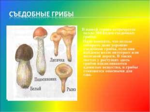 В нашей стране встречается около 300 видов съедобных грибов. Надо помнить, ч