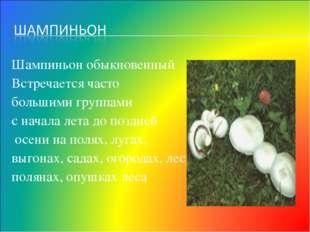 Шампиньон обыкновенный Встречается часто большими группами с начала лета до п