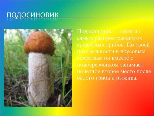 Подосиновик — один из самых распространенных съедобных грибов. По своей питат...