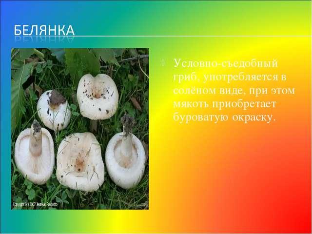 Условно-съедобный гриб, употребляется в солёном виде, при этом мякоть приобре...