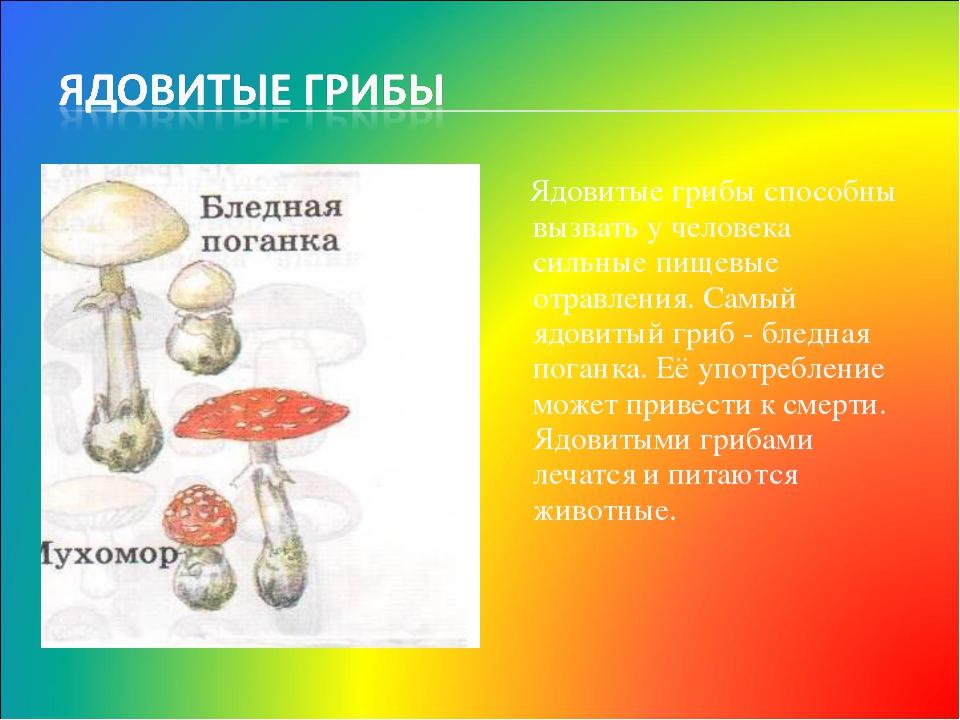 Ядовитые грибы способны вызвать у человека сильные пищевые отравления. Самый...