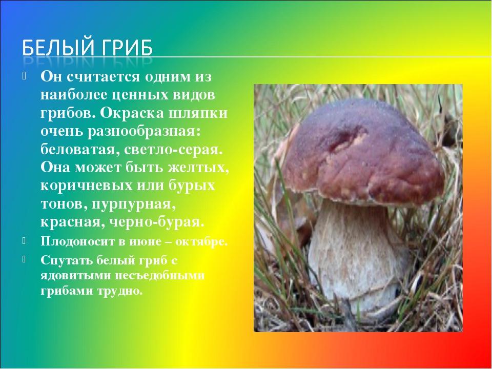 Он считается одним из наиболее ценных видов грибов. Окраска шляпки очень разн...