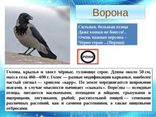 Ворона Сильная, большая птица Даже кошки не боится!.. Очень важная персона –