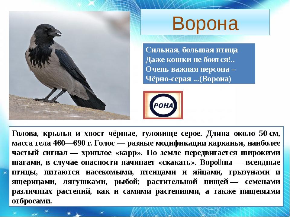 Ворона Сильная, большая птица Даже кошки не боится!.. Очень важная персона –...