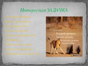 Интересная ЗАДАЧКА Лев старше дикобраза В два с половиной раза. По сведеньям