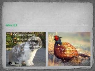 Задача № 4. В клетке находятся фазаны и кролики. Известно, что у них 35 голо