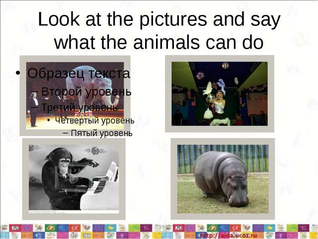 Look at the pictures and say what the animals can do