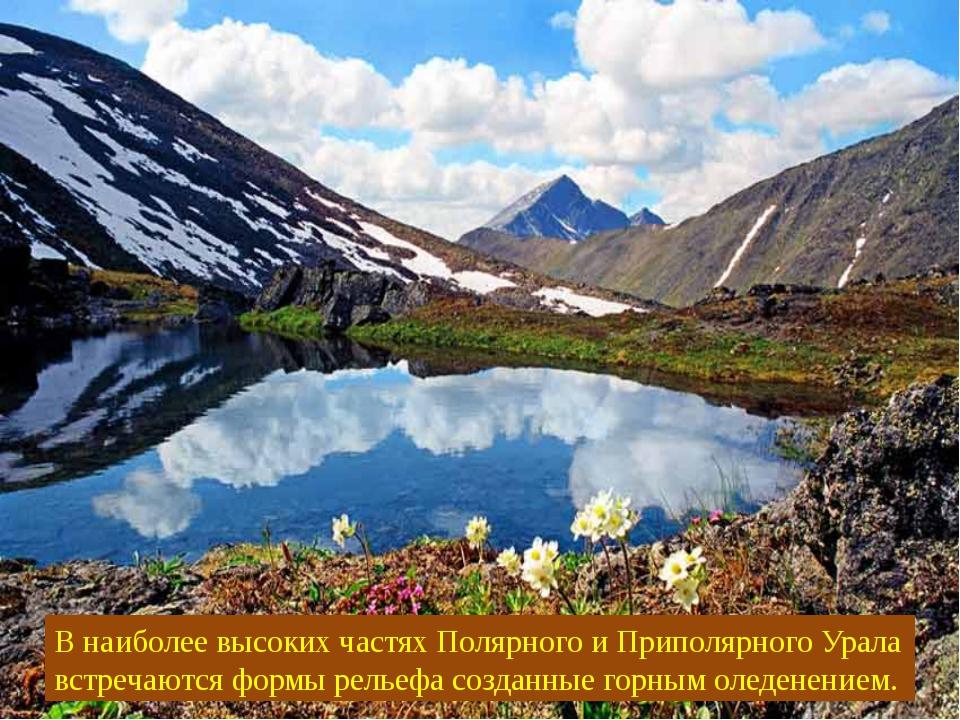 В наиболее высоких частях Полярного и Приполярного Урала встречаются формы ре...