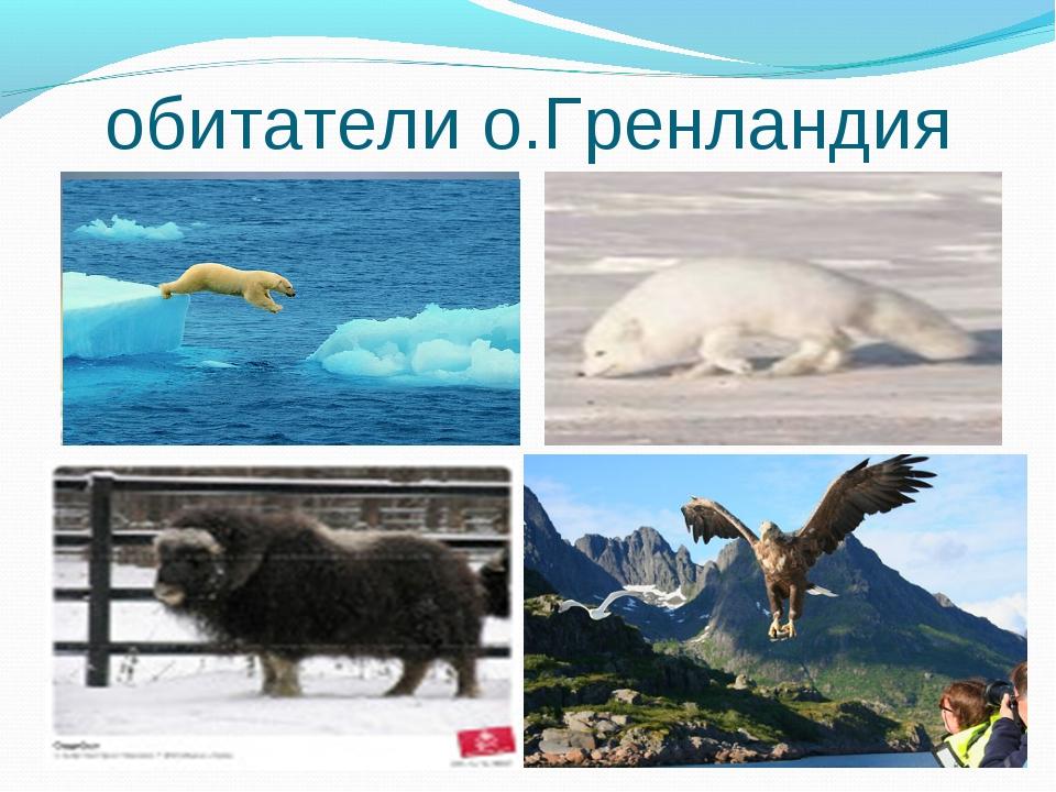 обитатели о.Гренландия