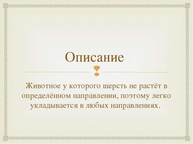 Описание Животное у которого шерсть не растёт в определённом направлении, поэ...