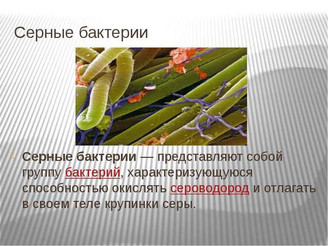 Серные бактерии Серные бактерии — представляют собой группу бактерий, характе...