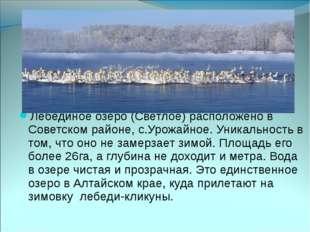Лебединое озеро (Светлое) расположено в Советском районе, с.Урожайное. Уника