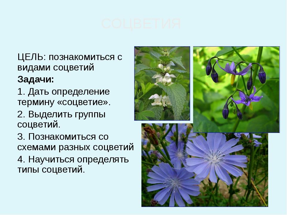 ЦЕЛЬ: познакомиться с видами соцветий Задачи: 1. Дать определение термину «с...