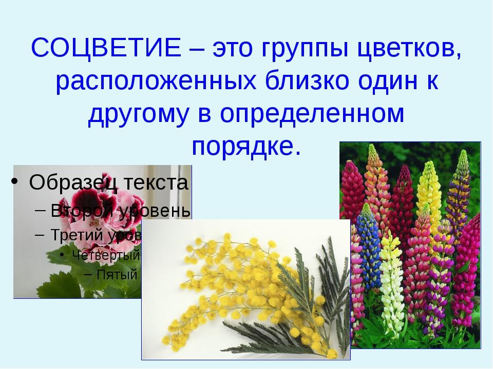 СОЦВЕТИЕ – это группы цветков, расположенных близко один к другому в определ...