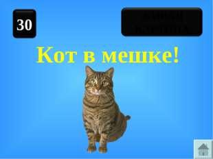Кот в мешке!