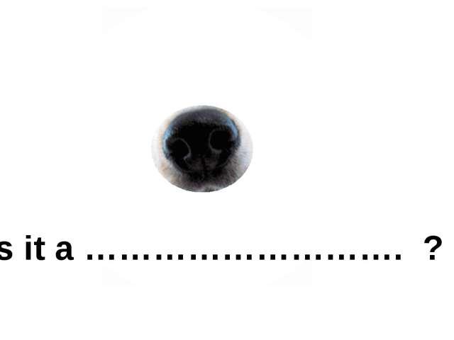 Is it a ………………………. ?