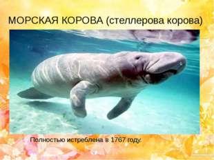МОРСКАЯ КОРОВА (стеллерова корова) Полностью истреблена в 1767 году.