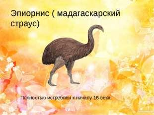 Эпиорнис ( мадагаскарский страус) Полностью истреблен к началу 16 века.