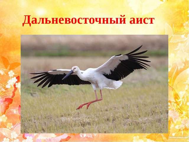 Дальневосточный аист
