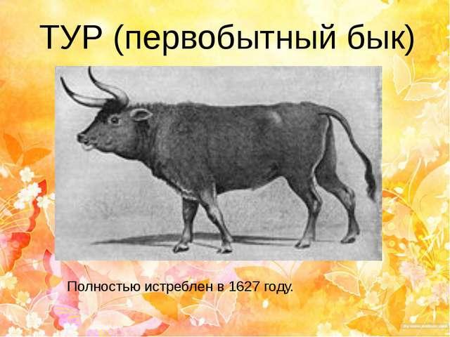 ТУР (первобытный бык) Полностью истреблен в 1627 году.