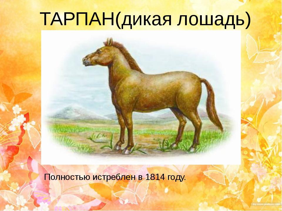 ТАРПАН(дикая лошадь) Полностью истреблен в 1814 году.